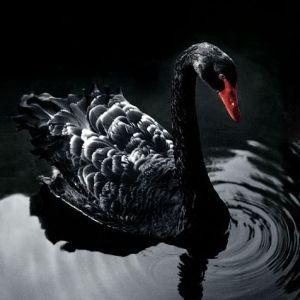 Три самых заметных теории последнего десятилетия – Черные Лебеди, Ошибка Выживших и Фрикономика.