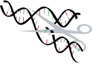 Впервые отредактирован геном на живом человеке
